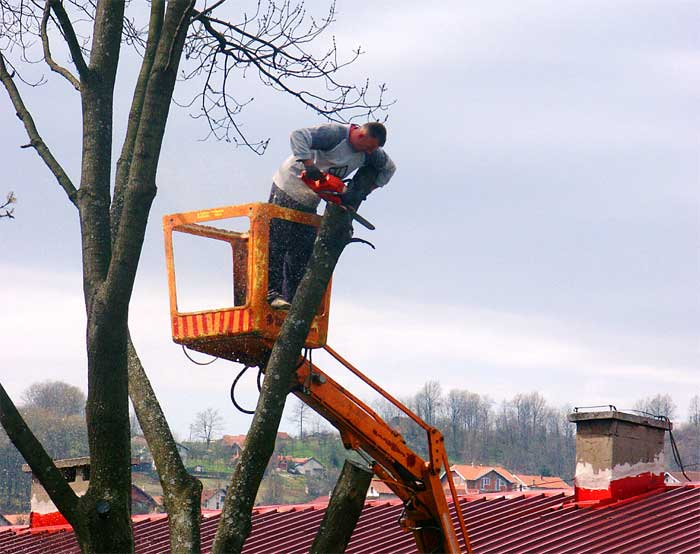 tree removal not diy