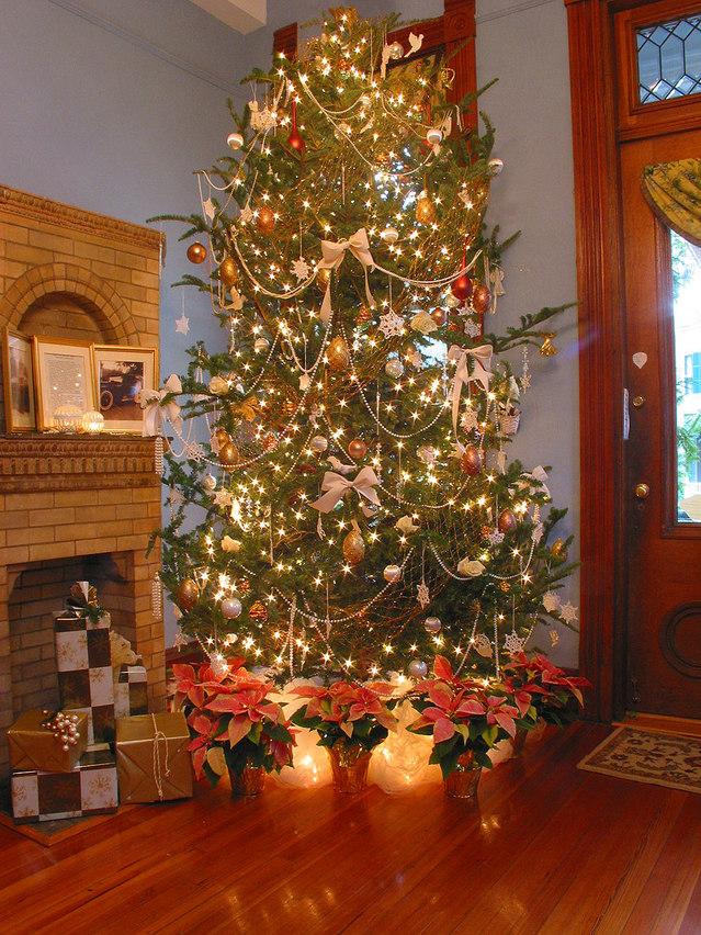 tips for selecting Christmas trees in Houston tx