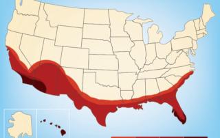 Termite season in Texas