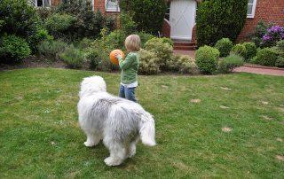 Choosing Pet Friendly Patio Furniture