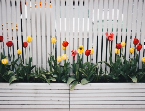 How To Choose the Right Fence for Your Home?